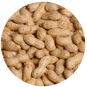 Picture Peanuts - Salted In-Shell - 5 oz.