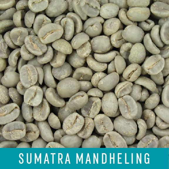 Picture Green Coffee Beans: Sumatra Mandheling - 1 LB